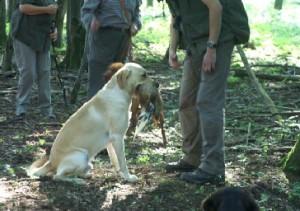 """Jagdhund """"Ben"""" bei der Arbeit mit Hundeführer Andreas Scheck"""